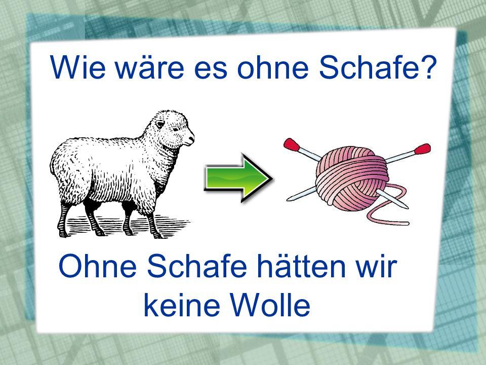 Ohne Schafe hätten wir keine Wolle