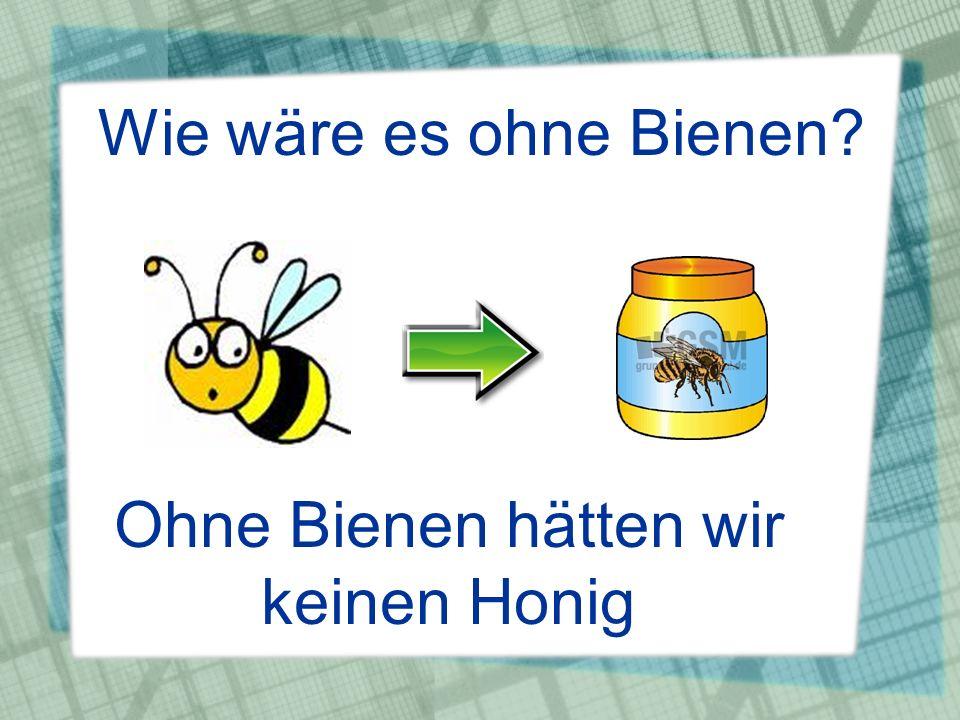 Ohne Bienen hätten wir keinen Honig