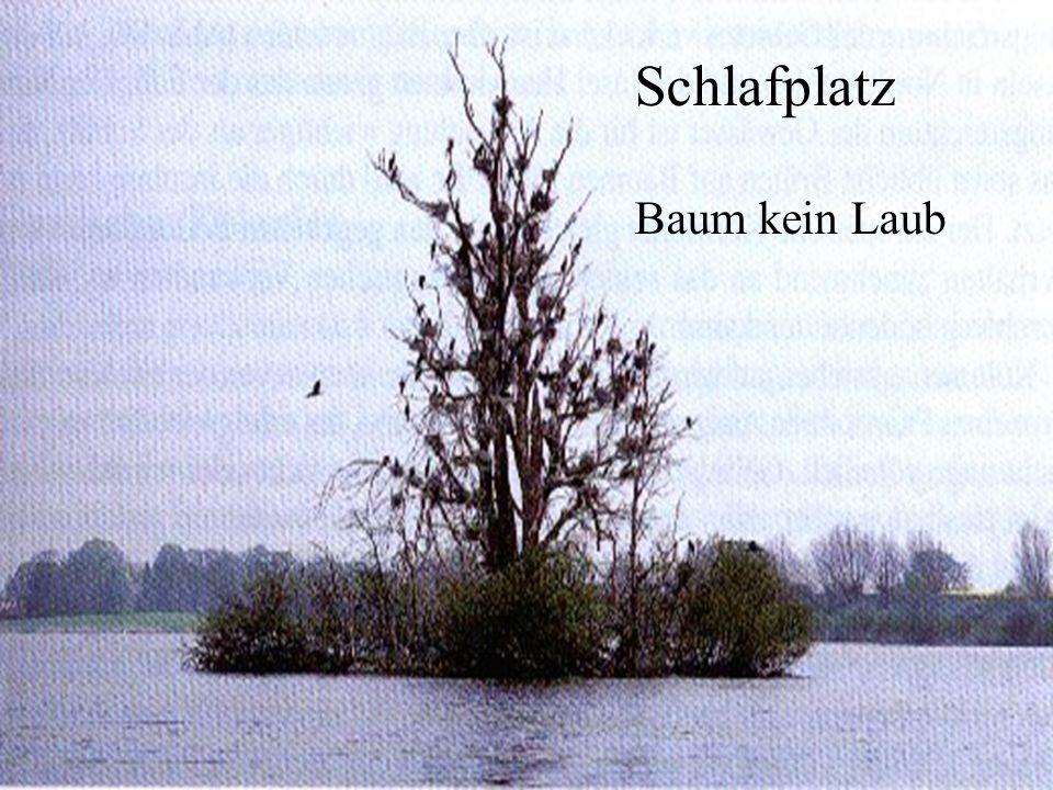 Schlafplatz Baum kein Laub 06.12.98 H. Lensker