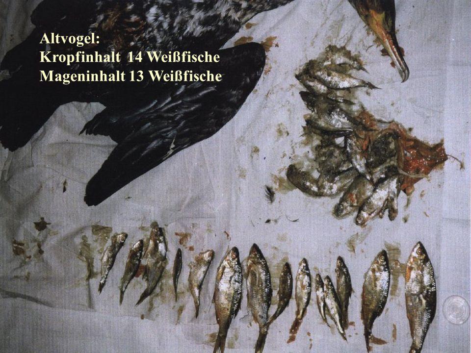 Kropfinhalt 14 Weißfische Mageninhalt 13 Weißfische
