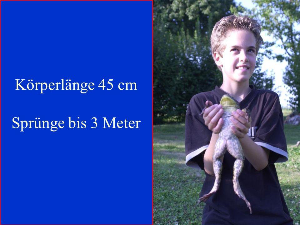 Körperlänge 45 cm Sprünge bis 3 Meter 06.12.98 H. Lensker