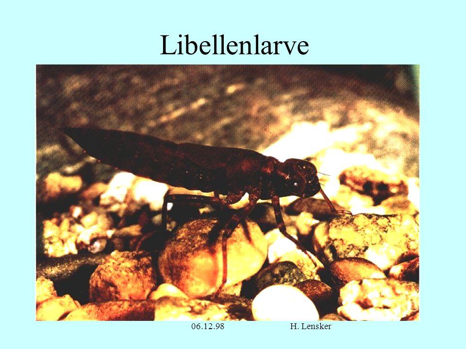 Libellenlarve 06.12.98 H. Lensker