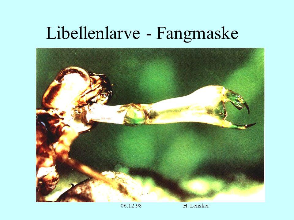 Libellenlarve - Fangmaske