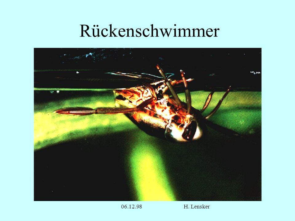 Rückenschwimmer 06.12.98 H. Lensker