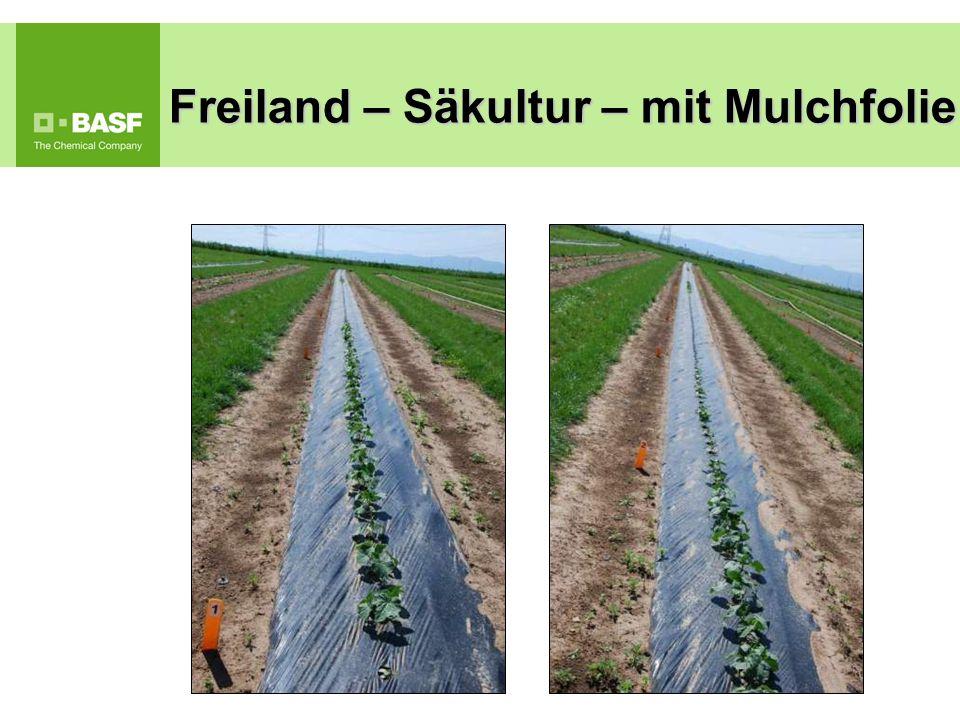Freiland – Säkultur – mit Mulchfolie