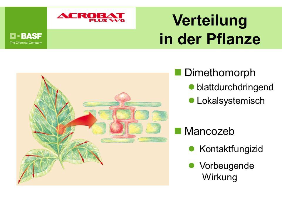 Verteilung in der Pflanze
