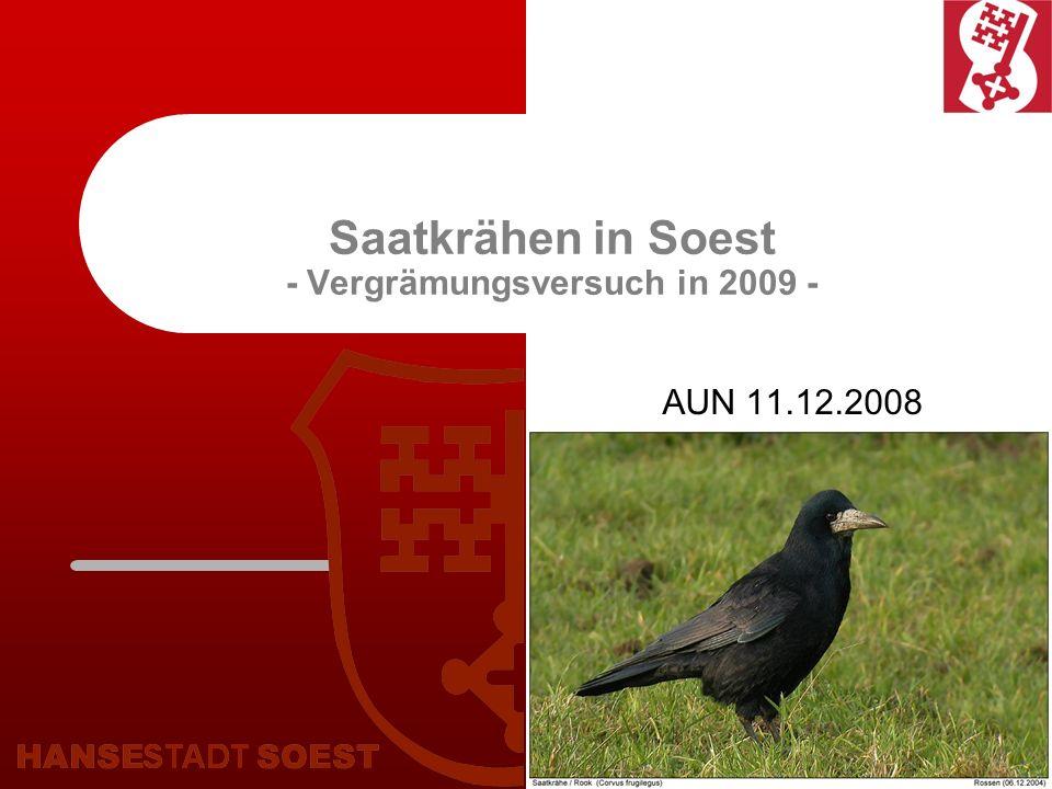 Saatkrähen in Soest - Vergrämungsversuch in 2009 -