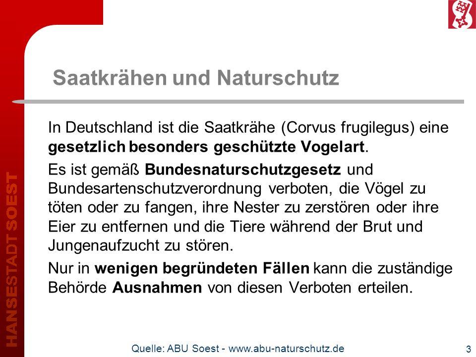 Saatkrähen und Naturschutz