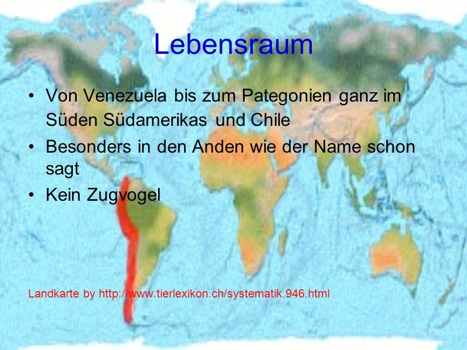 Lebensraum Von Venezuela bis zum Pategonien ganz im Süden Südamerikas und Chile. Besonders in den Anden wie der Name schon sagt.