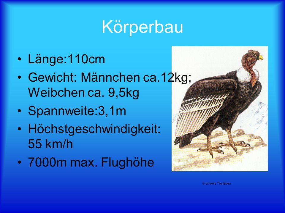 Körperbau Länge:110cm Gewicht: Männchen ca.12kg; Weibchen ca. 9,5kg