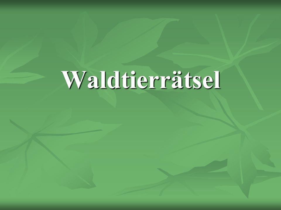 Waldtierrätsel
