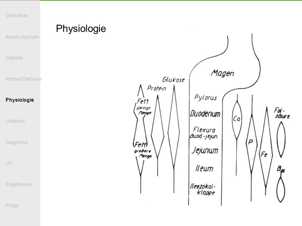 Physiologie Definition Ileum/Jejunum Statistik Atresie/Stenose