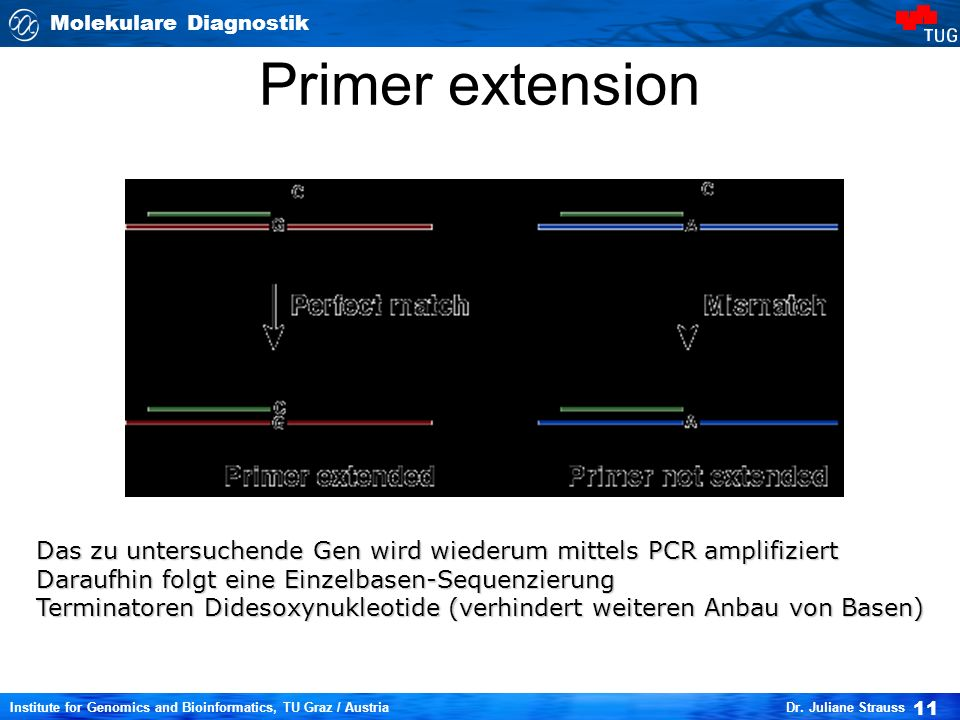 Primer extension Das zu untersuchende Gen wird wiederum mittels PCR amplifiziert. Daraufhin folgt eine Einzelbasen-Sequenzierung.