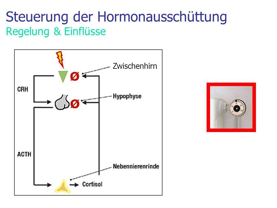 Steuerung der Hormonausschüttung Regelung & Einflüsse