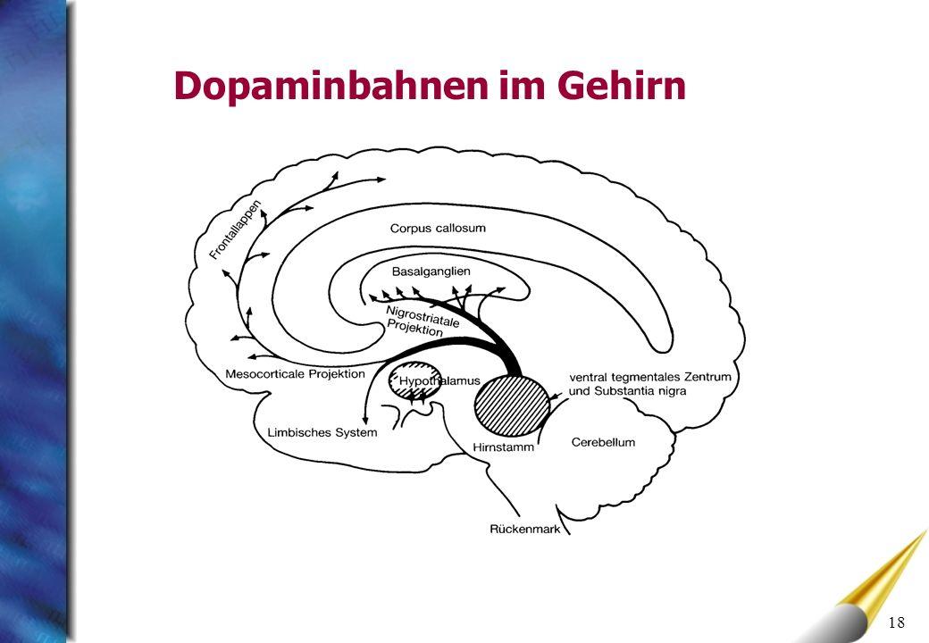 Dopaminbahnen im Gehirn