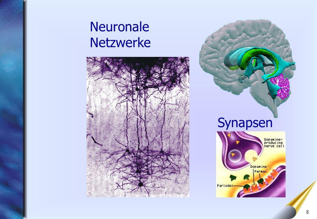 Neuronale Netzwerke Synapsen