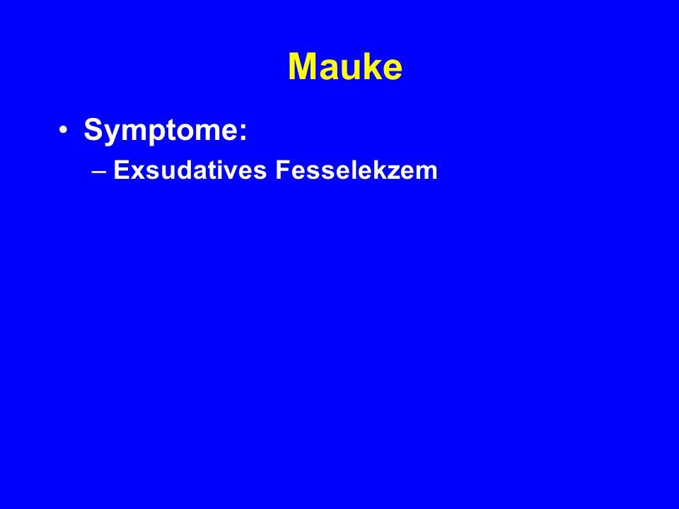 Mauke Symptome: Exsudatives Fesselekzem