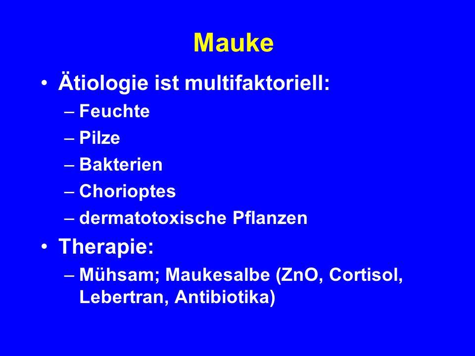 Mauke Ätiologie ist multifaktoriell: Therapie: Feuchte Pilze Bakterien