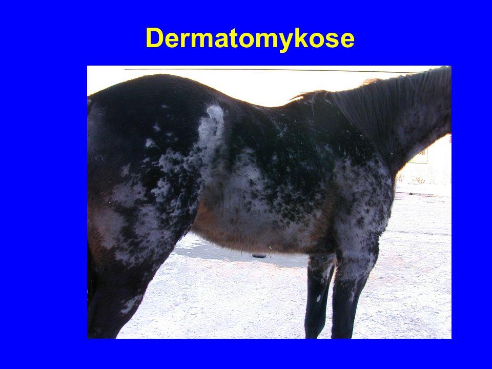 Dermatomykose