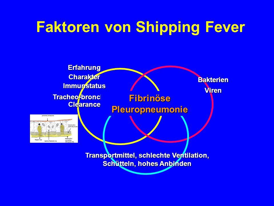 Faktoren von Shipping Fever
