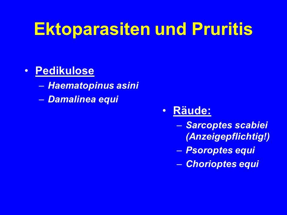 Ektoparasiten und Pruritis