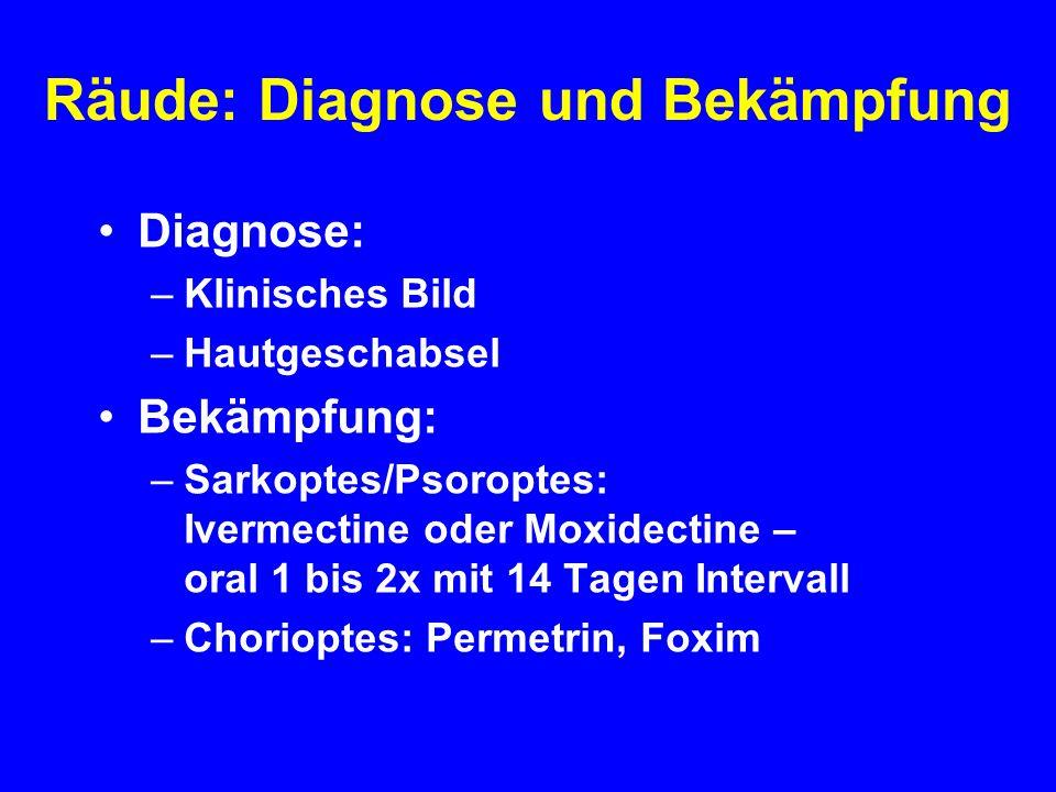 Räude: Diagnose und Bekämpfung