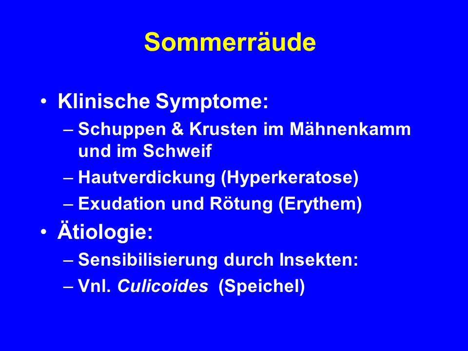 Sommerräude Klinische Symptome: Ätiologie: