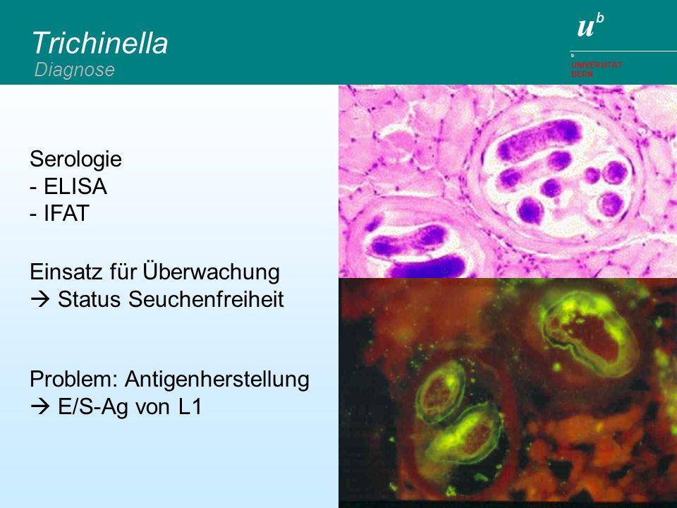Trichinella Serologie ELISA IFAT Einsatz für Überwachung