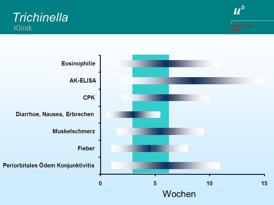 Trichinella Wochen Klinik Eosinophilie AK-ELISA CPK