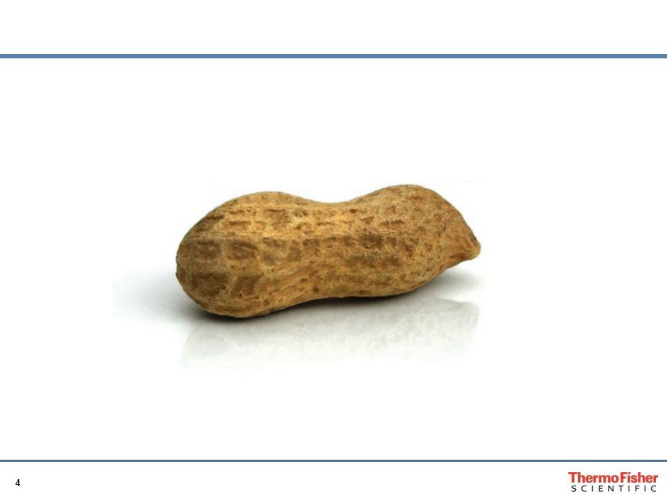 Auch die Erdnuss ist ein Allergenträger und enthält eine Vielzahl von Molekülen, von denen einzelne als Allergene wirksam sind.
