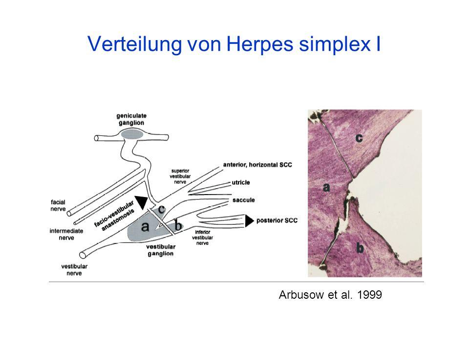 Verteilung von Herpes simplex I