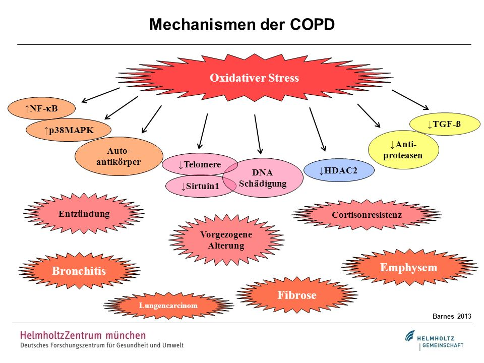 Mechanismen der COPD Oxidativer Stress Emphysem Bronchitis Fibrose