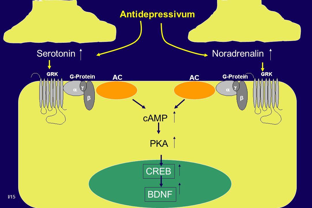 Antidepressivum Serotonin Noradrenalin AC cAMP PKA CREB BDNF