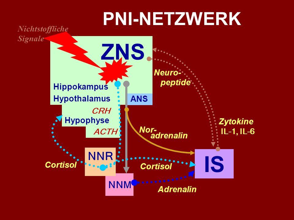 ZNS IS PNI-NETZWERK NNR NNM Nichtstoffliche Signale Hippokampus