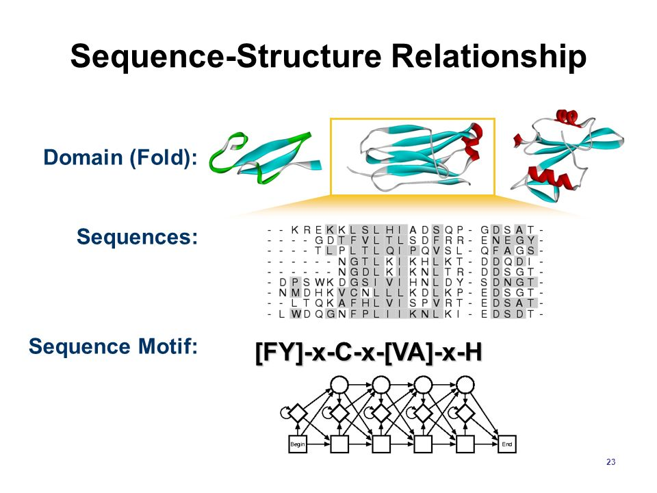 Sequence-Structure Relationship