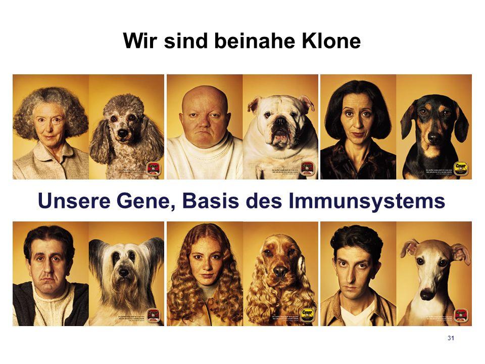 Unsere Gene, Basis des Immunsystems