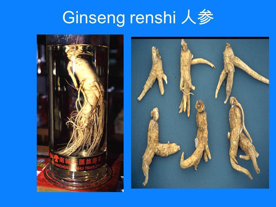 Ginseng renshi 人参