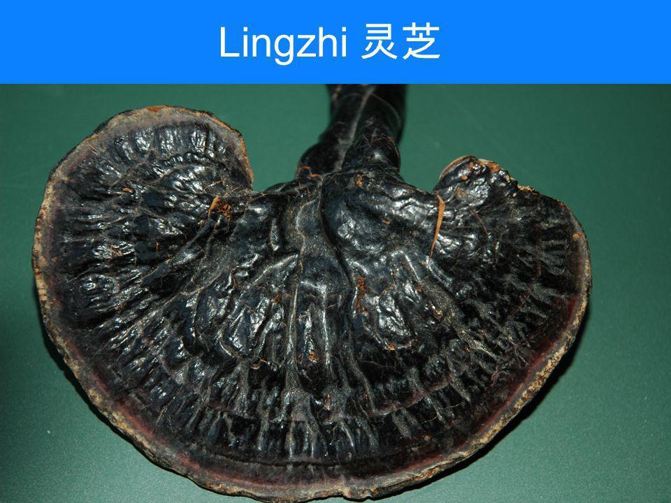 Lingzhi 灵芝