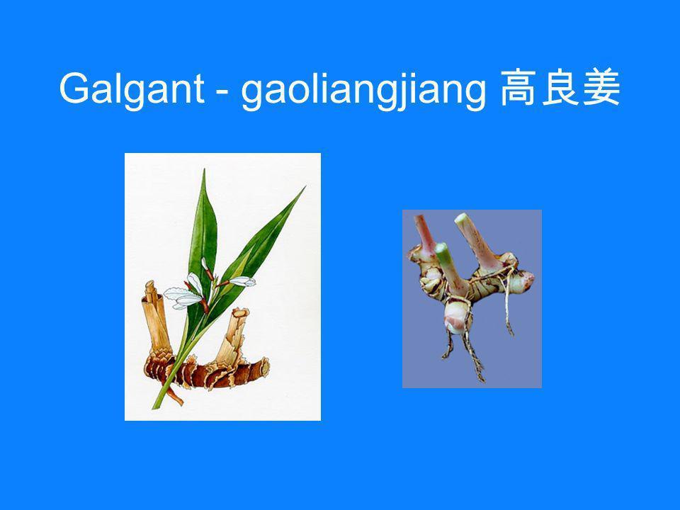 Galgant - gaoliangjiang 高良姜