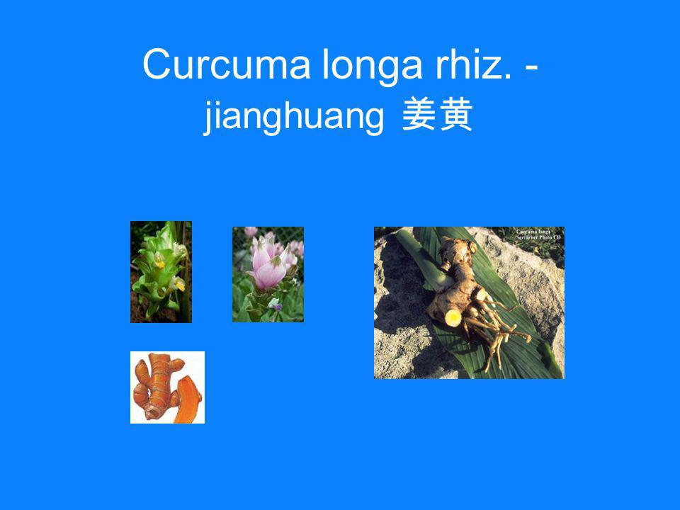 Curcuma longa rhiz. - jianghuang 姜黄