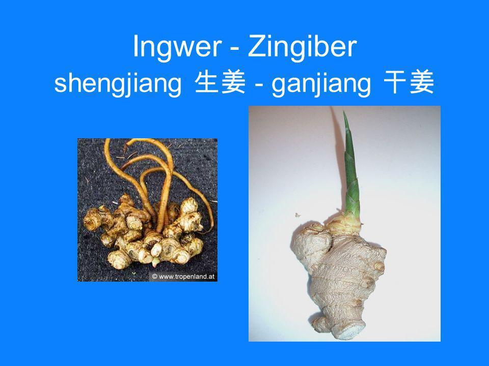 Ingwer - Zingiber shengjiang 生姜 - ganjiang 干姜