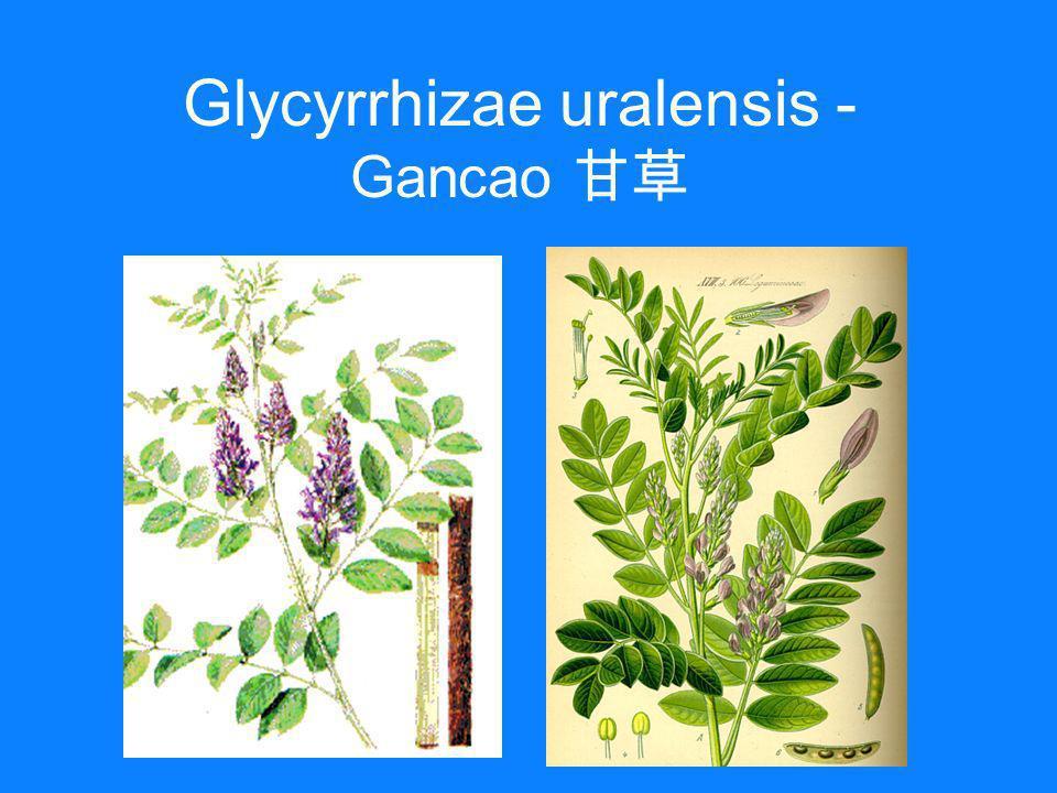 Glycyrrhizae uralensis - Gancao 甘草