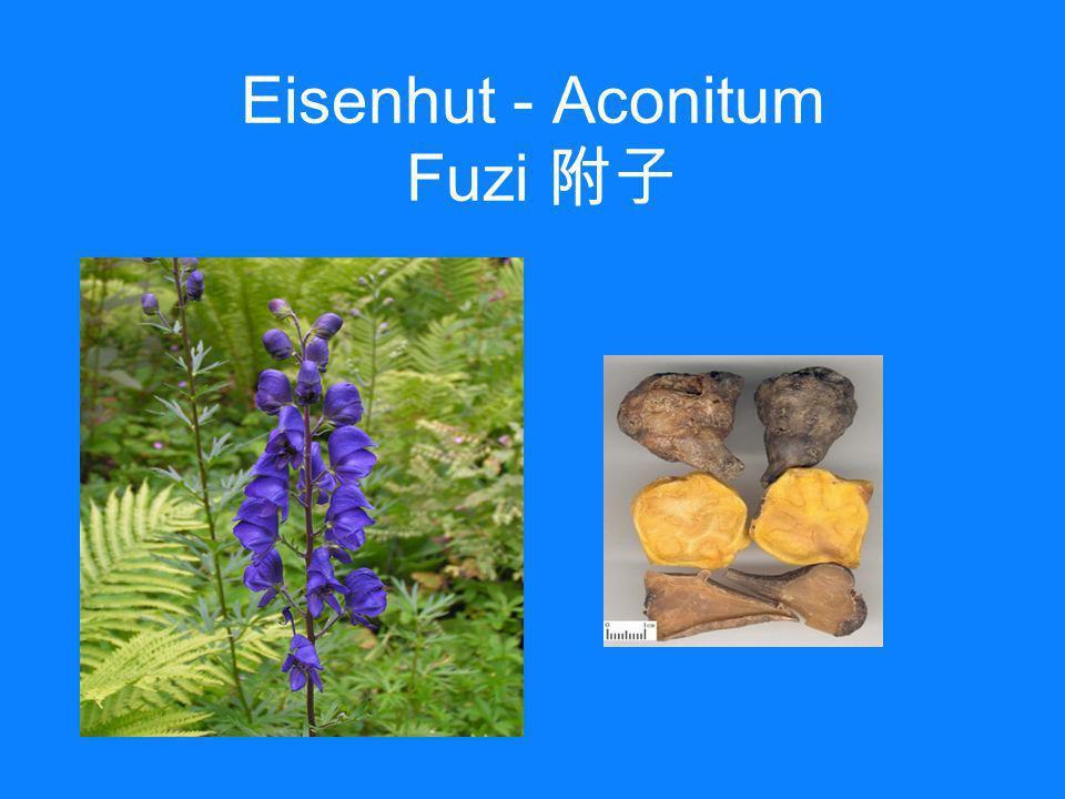 Eisenhut - Aconitum Fuzi 附子