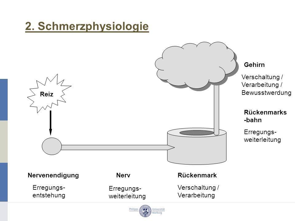 2. Schmerzphysiologie Gehirn Rückenmark Nervenendigung Nerv
