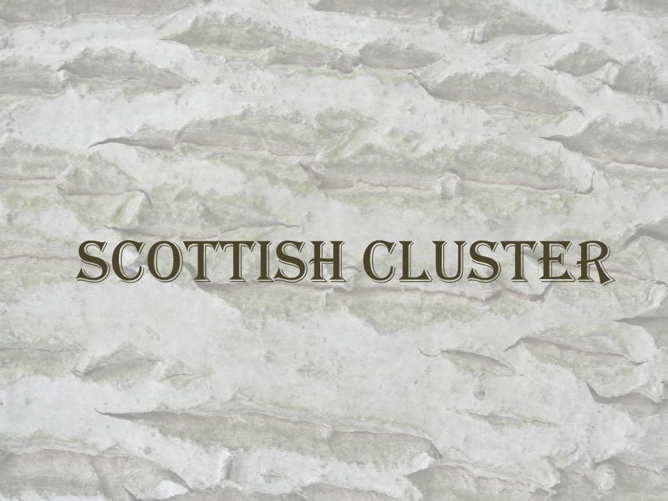 Scottish Cluster