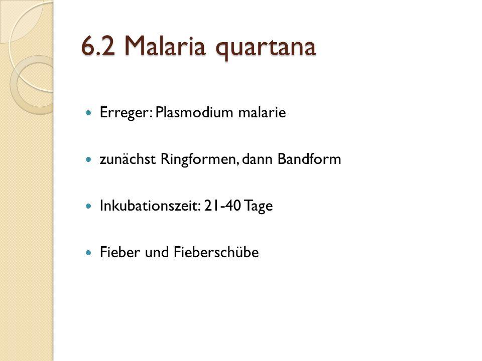 6.2 Malaria quartana Erreger: Plasmodium malarie