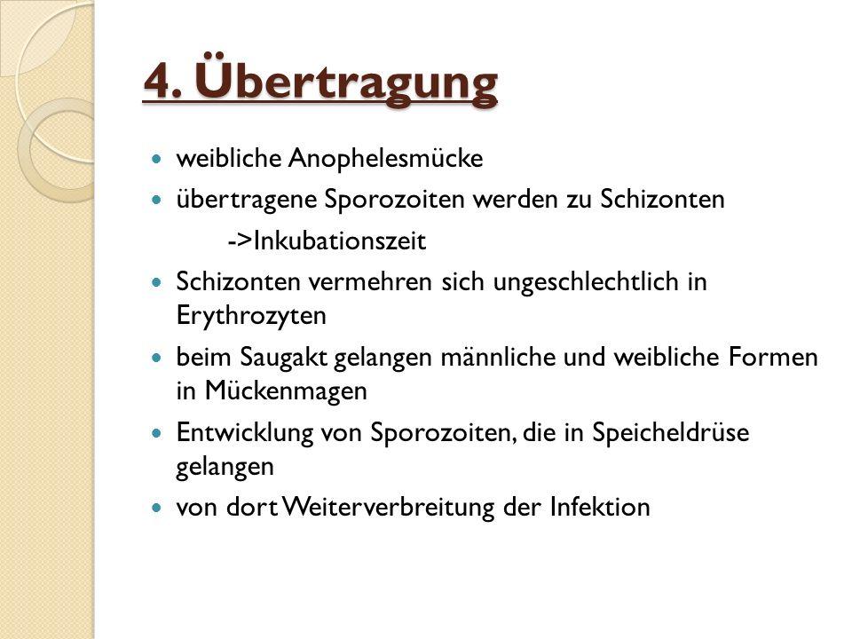 4. Übertragung weibliche Anophelesmücke