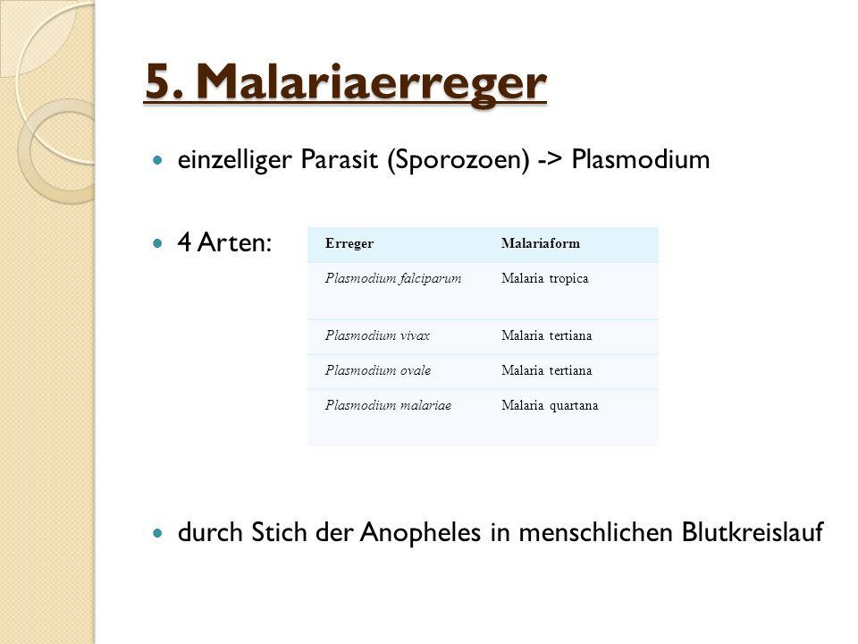 5. Malariaerreger einzelliger Parasit (Sporozoen) -> Plasmodium