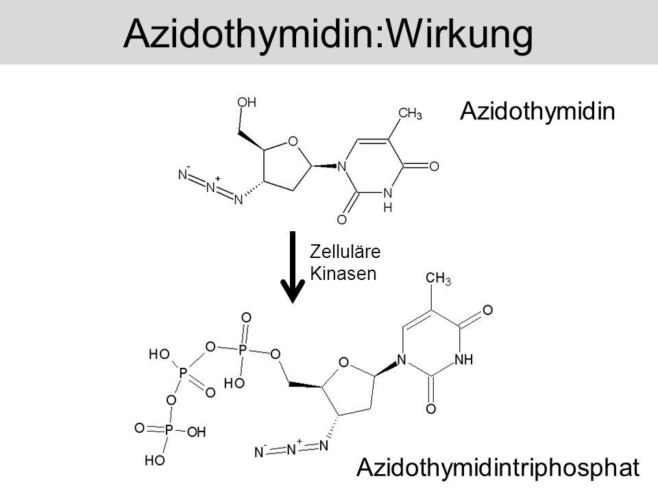 Azidothymidin:Wirkung