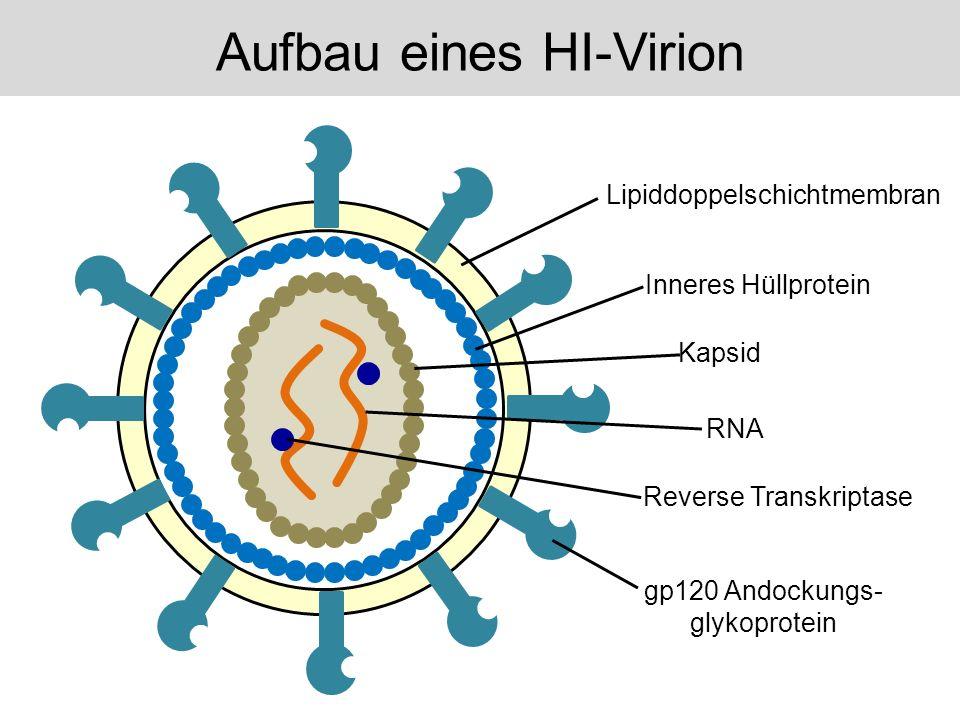 Aufbau eines HI-Virion